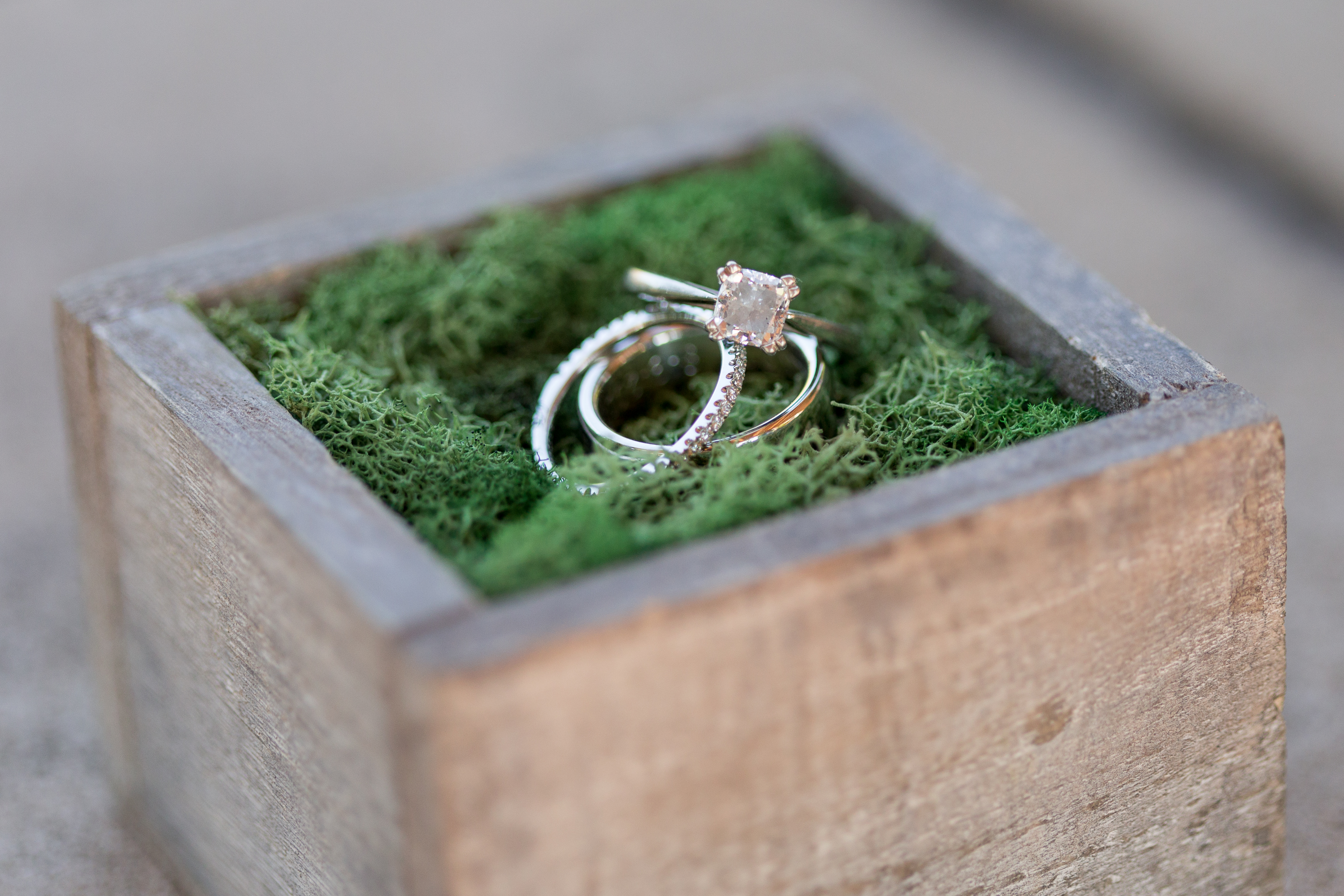wedding bands in moss-filled wooden box at Minnetrista Cultural Center
