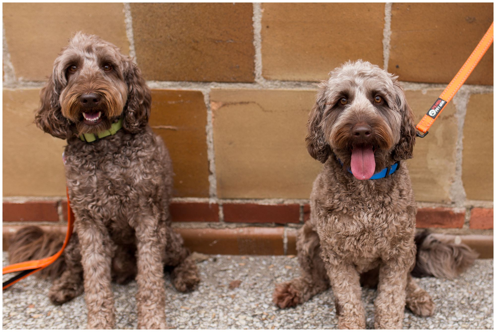 dogs during downtown Zionsville family session