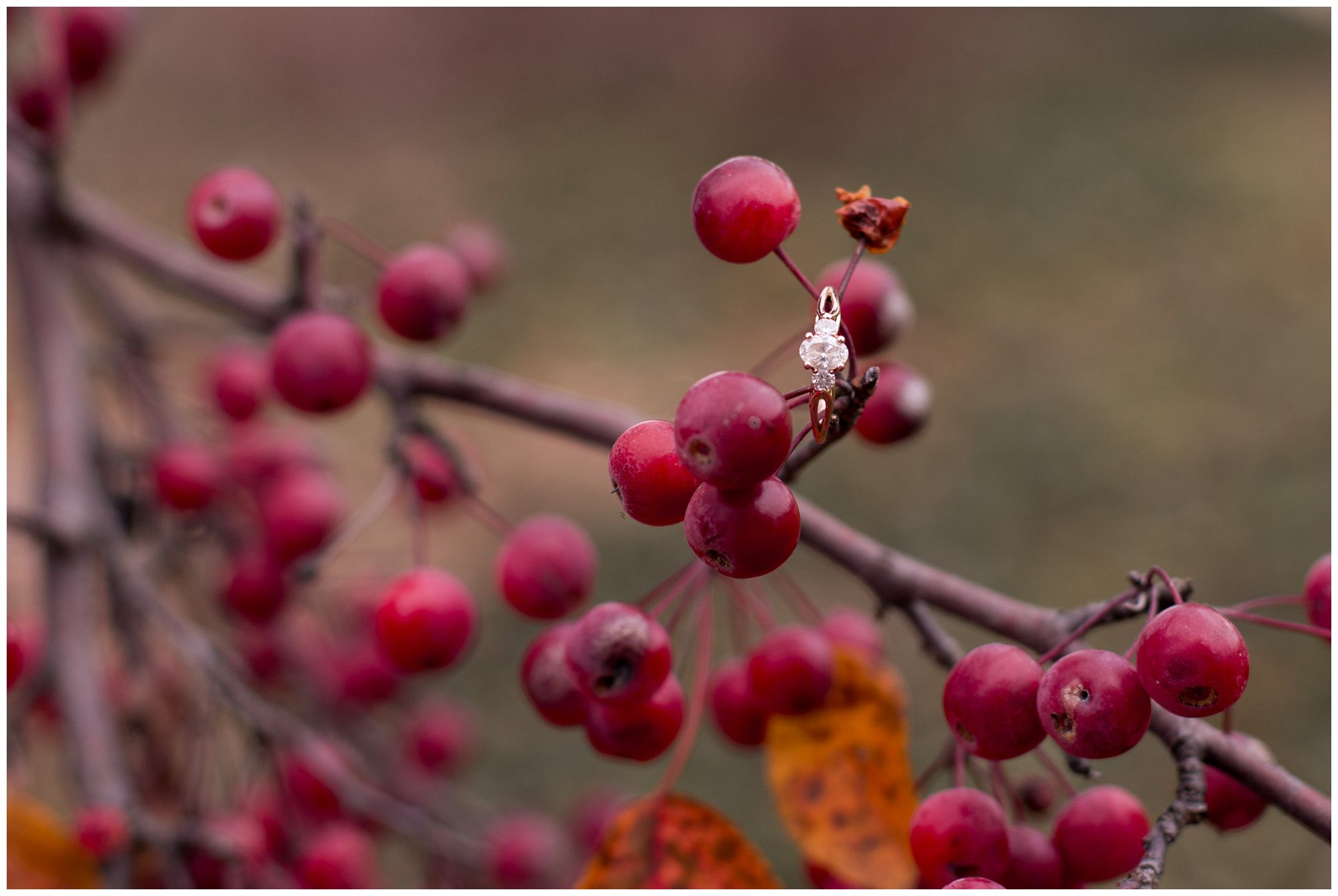 bride's engagement ring set on berries during Fort Wayne engagement session