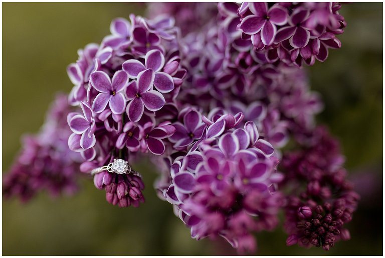 engagement ring on flowering trees on Purdue's campus